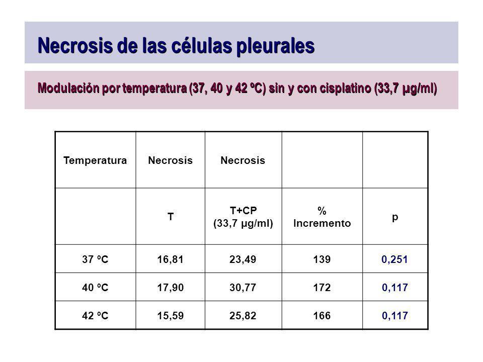 Necrosis de las células pleurales Modulación por temperatura (37, 40 y 42 ºC) sin y con cisplatino (33,7 µg/ml) TemperaturaNecrosis T T+CP (33,7 μg/ml
