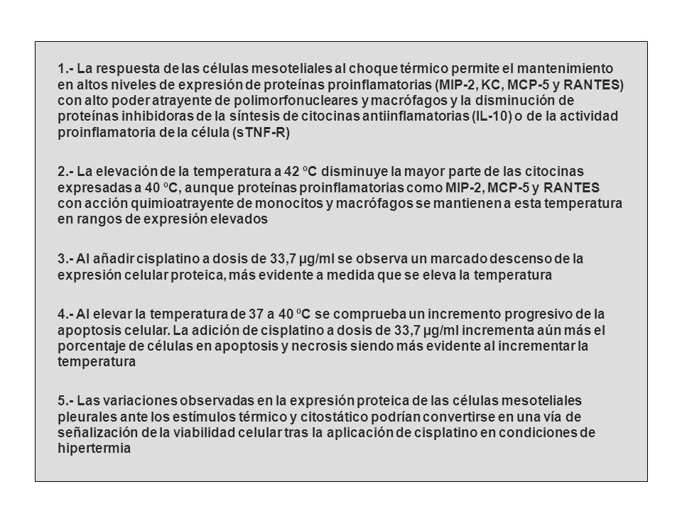 1.- La respuesta de las células mesoteliales al choque térmico permite el mantenimiento en altos niveles de expresión de proteínas proinflamatorias (M