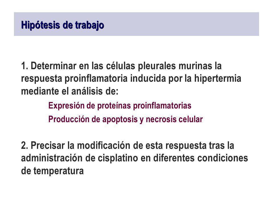 Hipótesis de trabajo 1. Determinar en las células pleurales murinas la respuesta proinflamatoria inducida por la hipertermia mediante el análisis de: