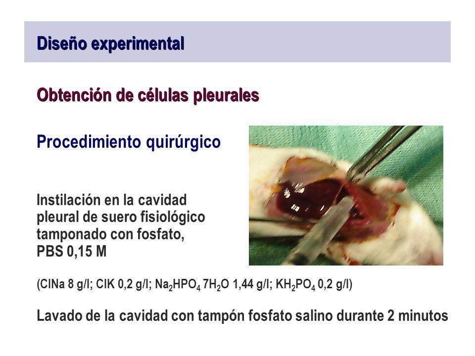 Diseño experimental Obtención de células pleurales Procedimiento quirúrgico Instilación en la cavidad pleural de suero fisiológico tamponado con fosfa