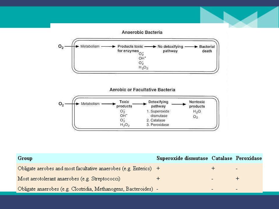 La respuesta de un organismo al O 2 depende de la presencia de varias enzimas que reaccionan con él y con varios radicales generados por las celulas.