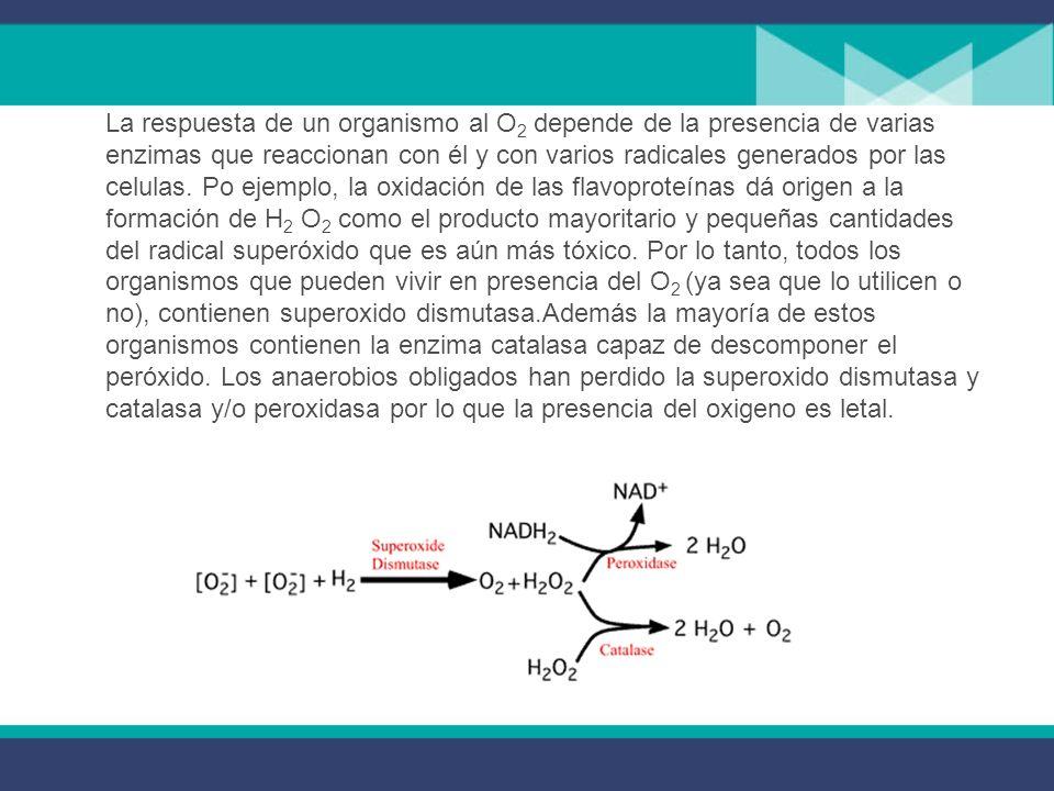 3.- Presencia del oxígeno Los gases principales que afectan al desarrollo microbiano son el oxígeno y el dióxido de carbono. Las bacterias presentan u