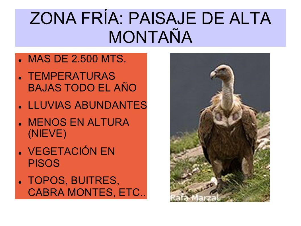 ZONA FRÍA: PAISAJE DE ALTA MONTAÑA MAS DE 2.500 MTS. TEMPERATURAS BAJAS TODO EL AÑO LLUVIAS ABUNDANTES MENOS EN ALTURA (NIEVE) VEGETACIÓN EN PISOS TOP