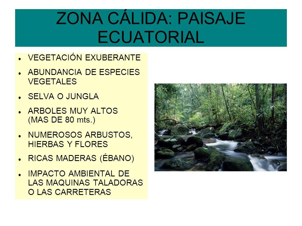 ZONA CÁLIDA: PAISAJE ECUATORIAL VEGETACIÓN EXUBERANTE ABUNDANCIA DE ESPECIES VEGETALES SELVA O JUNGLA ARBOLES MUY ALTOS (MAS DE 80 mts.) NUMEROSOS ARB
