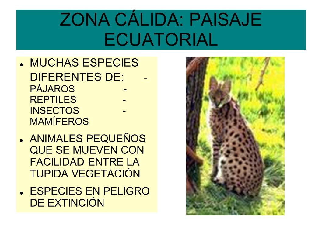ZONA CÁLIDA: PAISAJE ECUATORIAL MUCHAS ESPECIES DIFERENTES DE: - PÁJAROS - REPTILES - INSECTOS - MAMÍFEROS ANIMALES PEQUEÑOS QUE SE MUEVEN CON FACILID