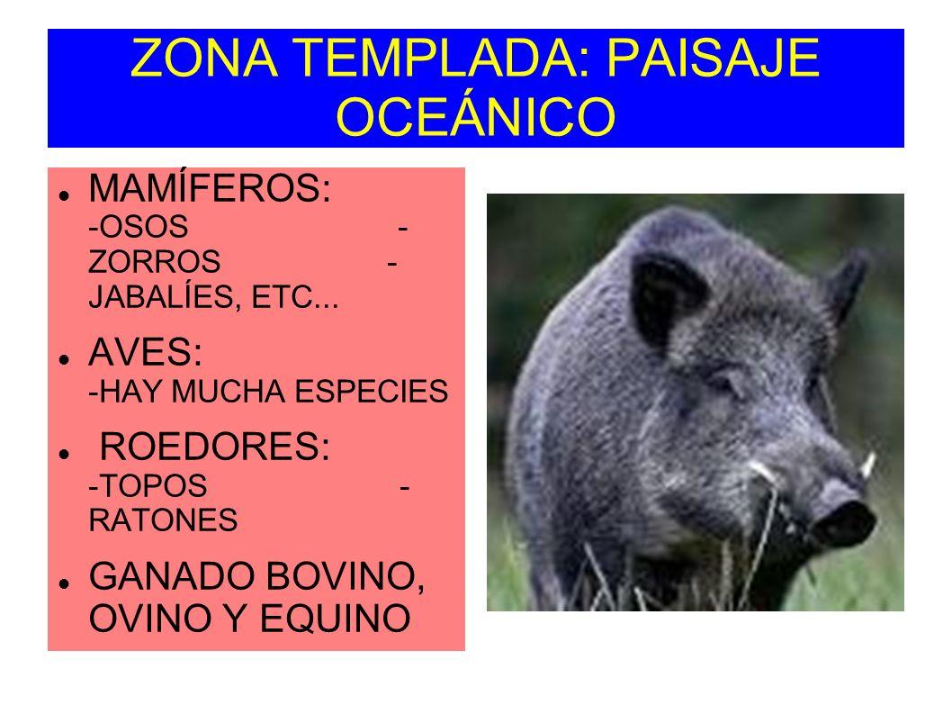 ZONA TEMPLADA: PAISAJE OCEÁNICO MAMÍFEROS: -OSOS - ZORROS - JABALÍES, ETC... AVES: -HAY MUCHA ESPECIES ROEDORES: -TOPOS - RATONES GANADO BOVINO, OVINO