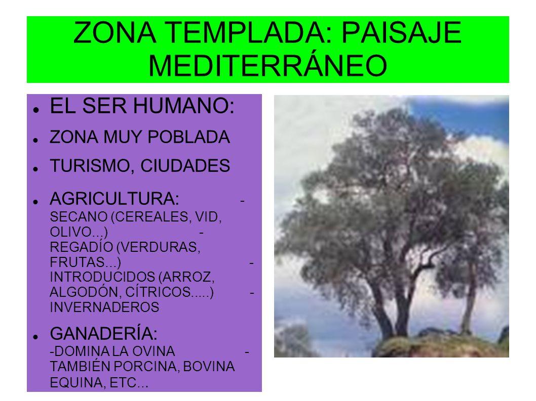 ZONA TEMPLADA: PAISAJE MEDITERRÁNEO EL SER HUMANO: ZONA MUY POBLADA TURISMO, CIUDADES AGRICULTURA: - SECANO (CEREALES, VID, OLIVO...) - REGADÍO (VERDU