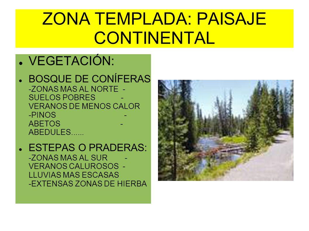 ZONA TEMPLADA: PAISAJE CONTINENTAL VEGETACIÓN: BOSQUE DE CONÍFERAS -ZONAS MAS AL NORTE - SUELOS POBRES - VERANOS DE MENOS CALOR -PINOS - ABETOS - ABED