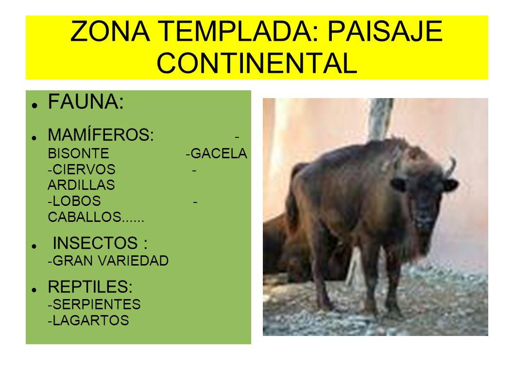 ZONA TEMPLADA: PAISAJE CONTINENTAL FAUNA: MAMÍFEROS: - BISONTE -GACELA -CIERVOS - ARDILLAS -LOBOS - CABALLOS...... INSECTOS : -GRAN VARIEDAD REPTILES: