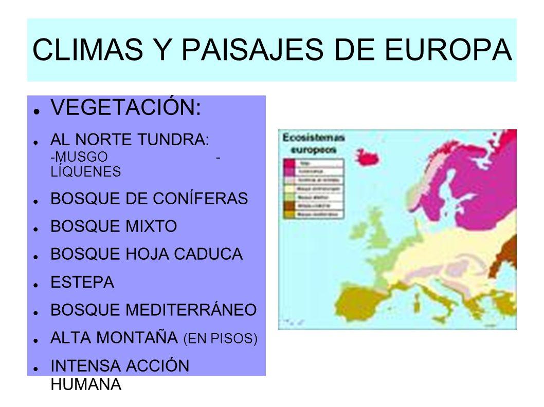 CLIMAS Y PAISAJES DE EUROPA VEGETACIÓN: AL NORTE TUNDRA: -MUSGO - LÍQUENES BOSQUE DE CONÍFERAS BOSQUE MIXTO BOSQUE HOJA CADUCA ESTEPA BOSQUE MEDITERRÁ