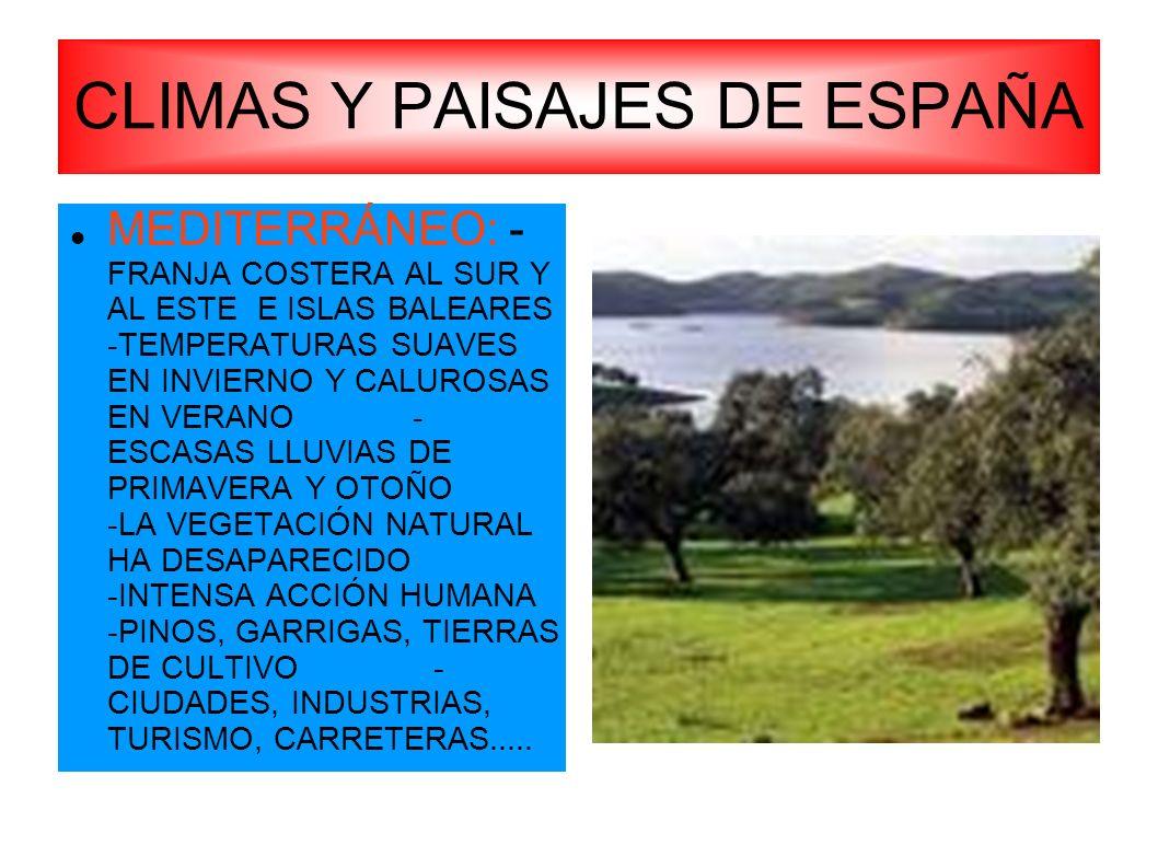 CLIMAS Y PAISAJES DE ESPAÑA MEDITERRÁNEO: - FRANJA COSTERA AL SUR Y AL ESTE E ISLAS BALEARES -TEMPERATURAS SUAVES EN INVIERNO Y CALUROSAS EN VERANO -