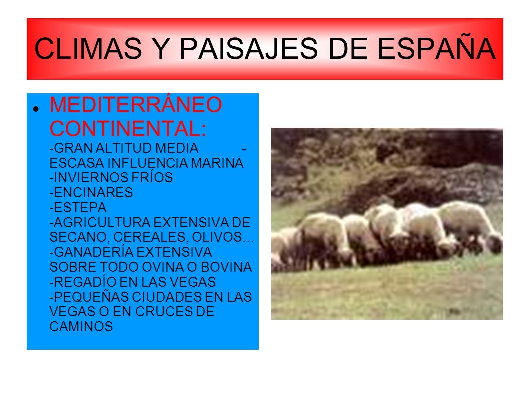 CLIMAS Y PAISAJES DE ESPAÑA MEDITERRÁNEO CONTINENTAL: -GRAN ALTITUD MEDIA - ESCASA INFLUENCIA MARINA -INVIERNOS FRÍOS -ENCINARES -ESTEPA -AGRICULTURA