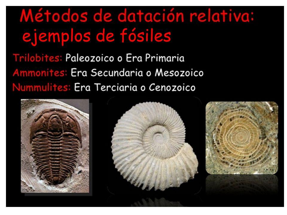 ejemplos de fósiles