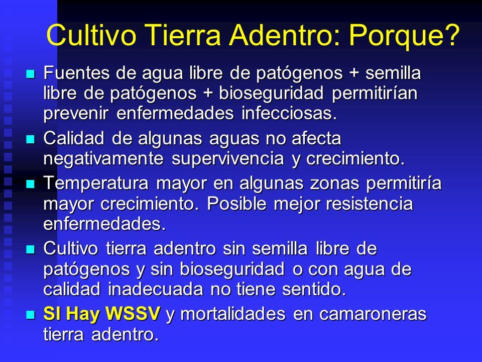 Cultivo Tierra Adentro: Porque? Fuentes de agua libre de patógenos + semilla libre de patógenos + bioseguridad permitirían prevenir enfermedades infec