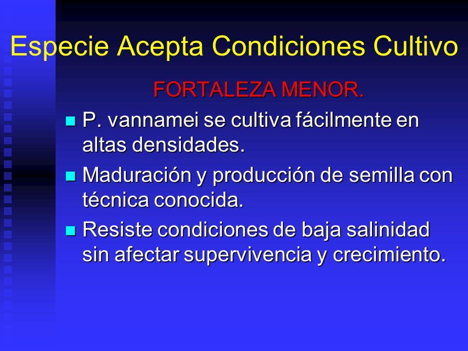 Especie Acepta Condiciones Cultivo FORTALEZA MENOR. P. vannamei se cultiva fácilmente en altas densidades. P. vannamei se cultiva fácilmente en altas