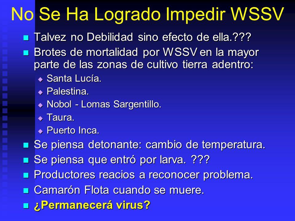 No Se Ha Logrado Impedir WSSV Talvez no Debilidad sino efecto de ella.??? Talvez no Debilidad sino efecto de ella.??? Brotes de mortalidad por WSSV en