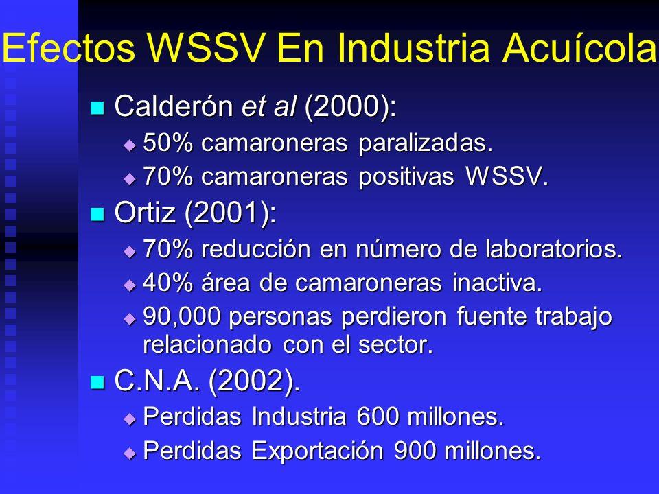 Efectos WSSV En Industria Acuícola Calderón et al (2000): Calderón et al (2000): 50% camaroneras paralizadas. 50% camaroneras paralizadas. 70% camaron