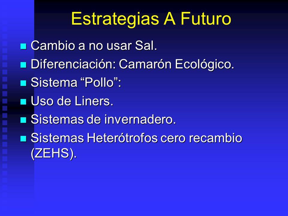 Estrategias A Futuro Cambio a no usar Sal. Cambio a no usar Sal. Diferenciación: Camarón Ecológico. Diferenciación: Camarón Ecológico. Sistema Pollo:
