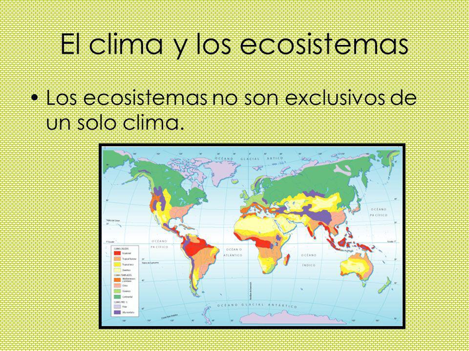 El clima y los ecosistemas Los ecosistemas no son exclusivos de un solo clima.