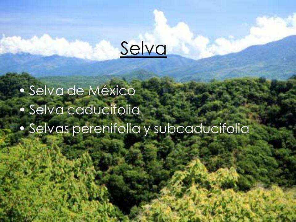 Selva Selva de México Selva caducifolia Selvas perenifolia y subcaducifolia