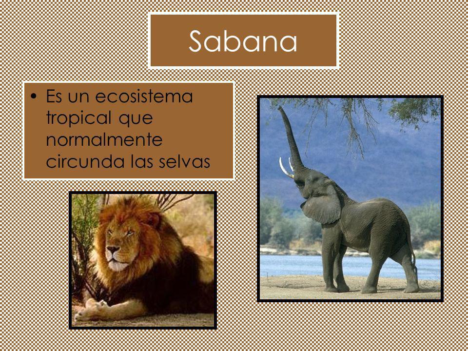 Sabana Es un ecosistema tropical que normalmente circunda las selvas