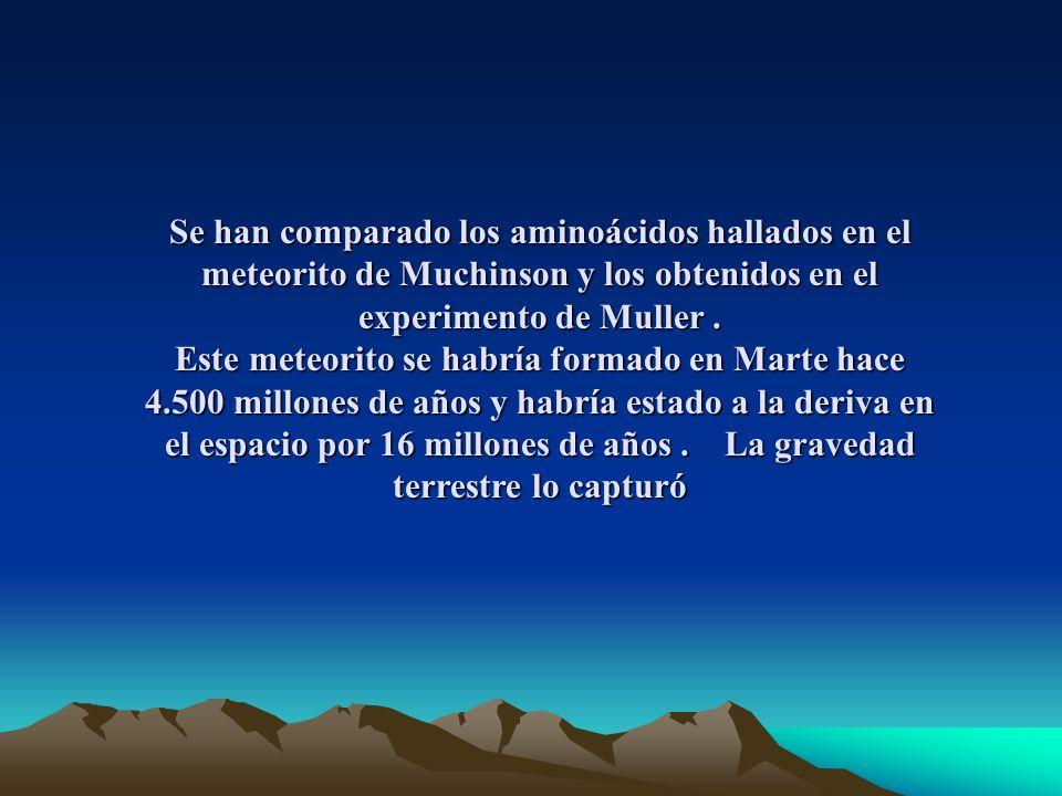 Se han comparado los aminoácidos hallados en el meteorito de Muchinson y los obtenidos en el experimento de Muller.