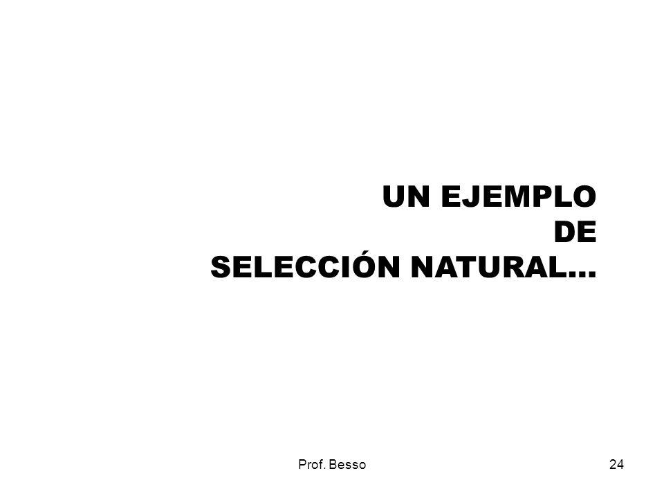 Prof. Besso24 UN EJEMPLO DE SELECCIÓN NATURAL…