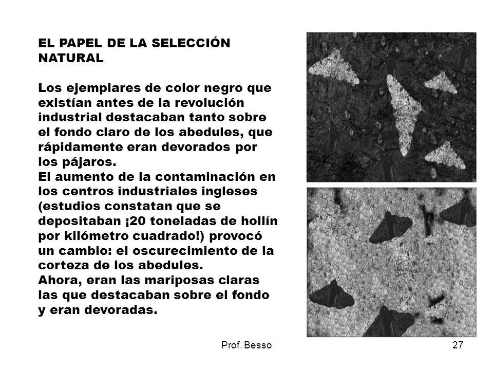 Prof. Besso27 EL PAPEL DE LA SELECCIÓN NATURAL Los ejemplares de color negro que existían antes de la revolución industrial destacaban tanto sobre el