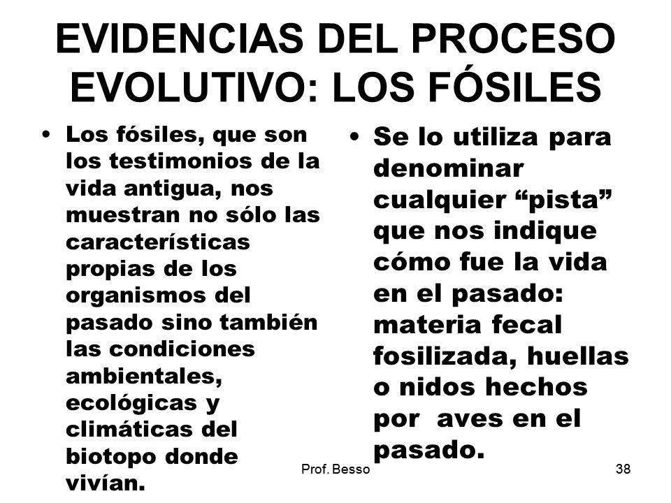 Prof. Besso38 EVIDENCIAS DEL PROCESO EVOLUTIVO: LOS FÓSILES Los fósiles, que son los testimonios de la vida antigua, nos muestran no sólo las caracter