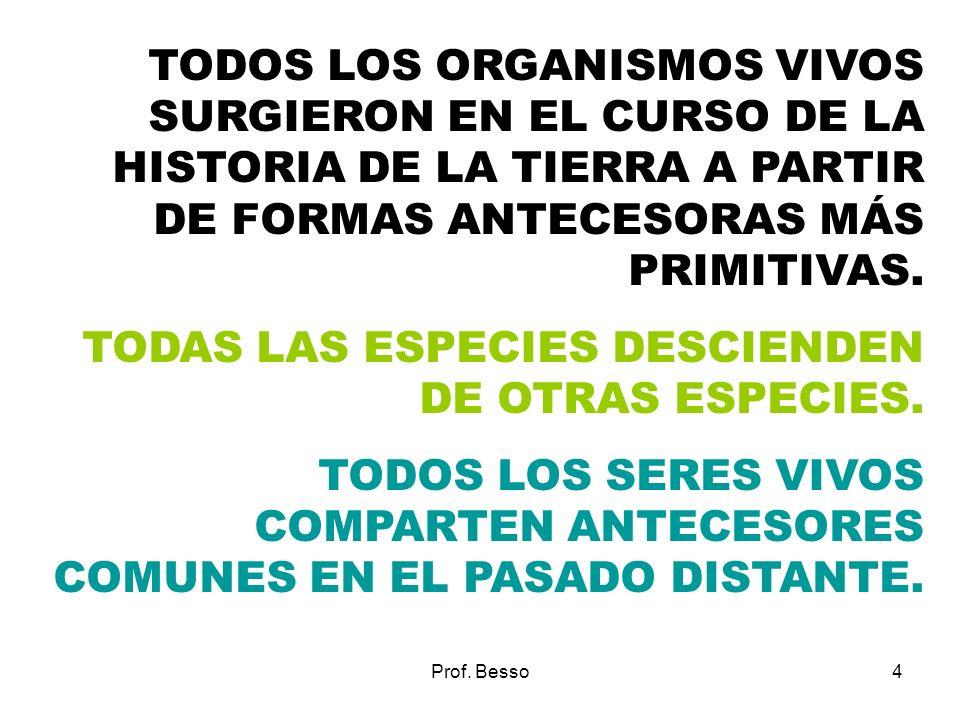 Prof. Besso4 TODOS LOS ORGANISMOS VIVOS SURGIERON EN EL CURSO DE LA HISTORIA DE LA TIERRA A PARTIR DE FORMAS ANTECESORAS MÁS PRIMITIVAS. TODAS LAS ESP