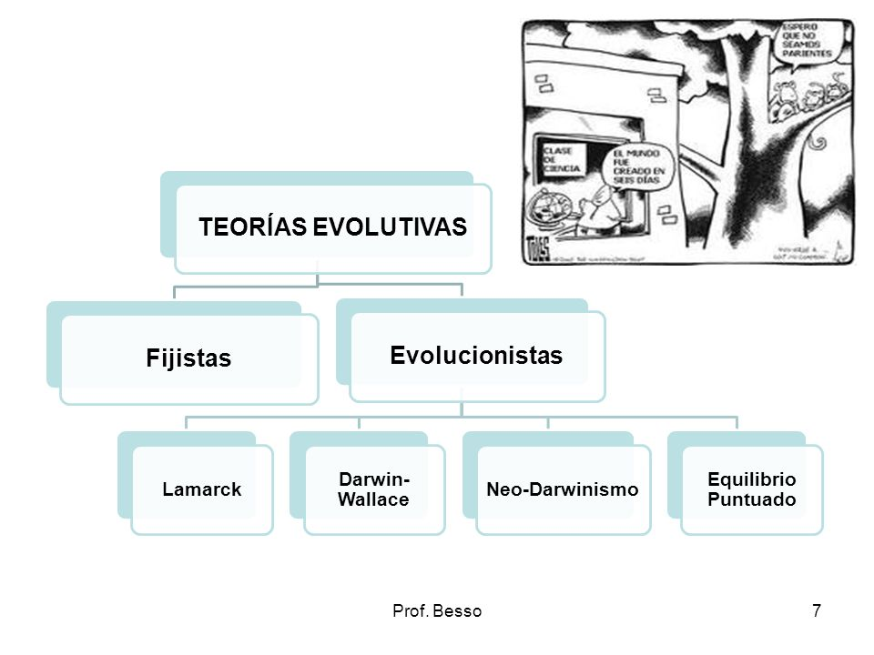 Prof. Besso7 TEORÍAS EVOLUTIVASFijistasEvolucionistas Lamarck Darwin- Wallace Neo-Darwinismo Equilibrio Puntuado
