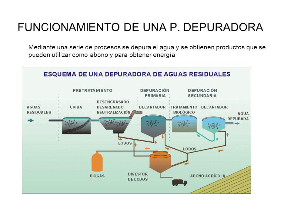 FUNCIONAMIENTO DE UNA P. DEPURADORA Mediante una serie de procesos se depura el agua y se obtienen productos que se pueden utilizar como abono y para
