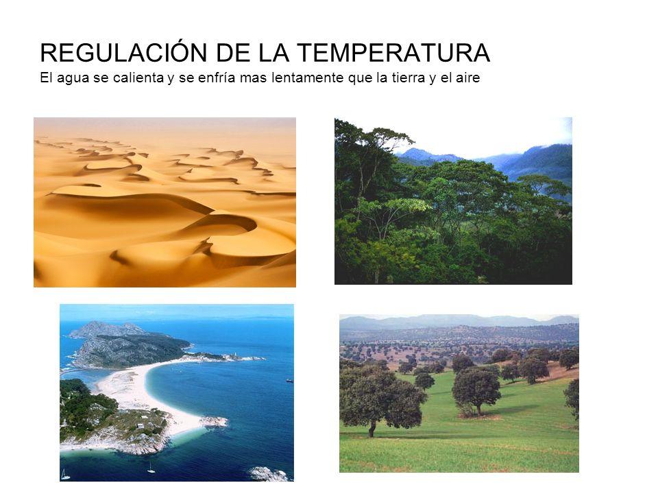REGULACIÓN DE LA TEMPERATURA CORPORAL El sudor atrapa calorías del cuerpo y al evaporarse rebaja la temperatura