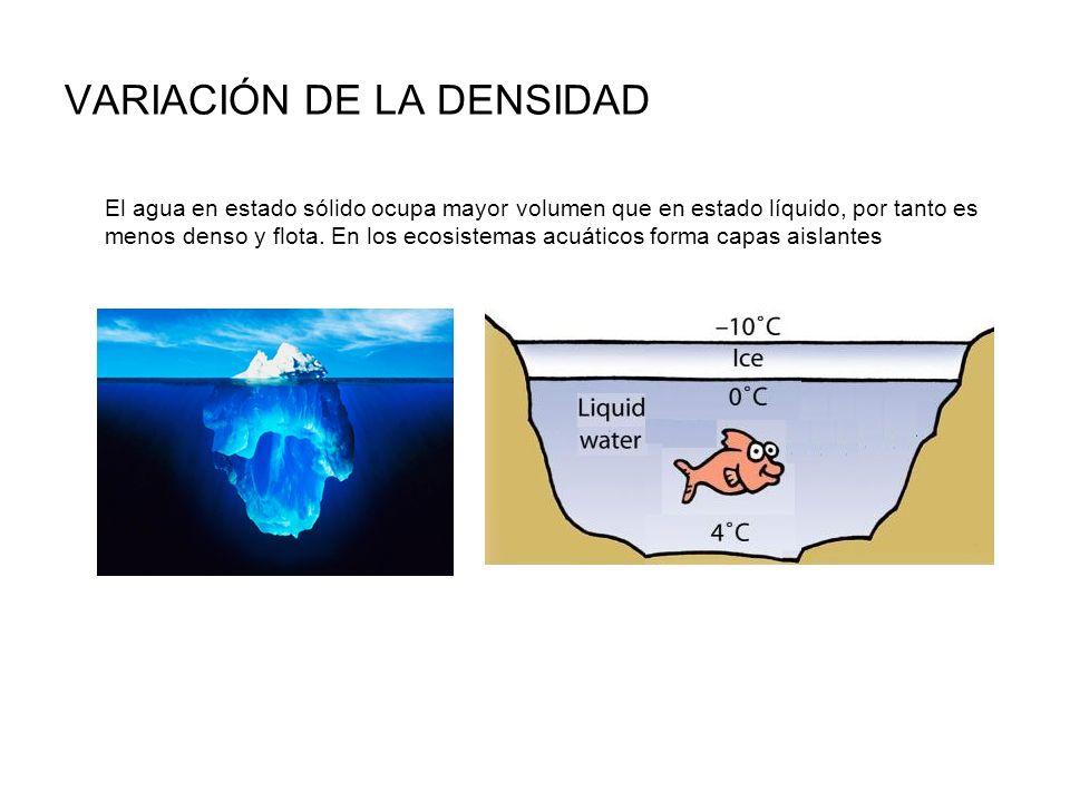 VARIACIÓN DE LA DENSIDAD El agua en estado sólido ocupa mayor volumen que en estado líquido, por tanto es menos denso y flota. En los ecosistemas acuá