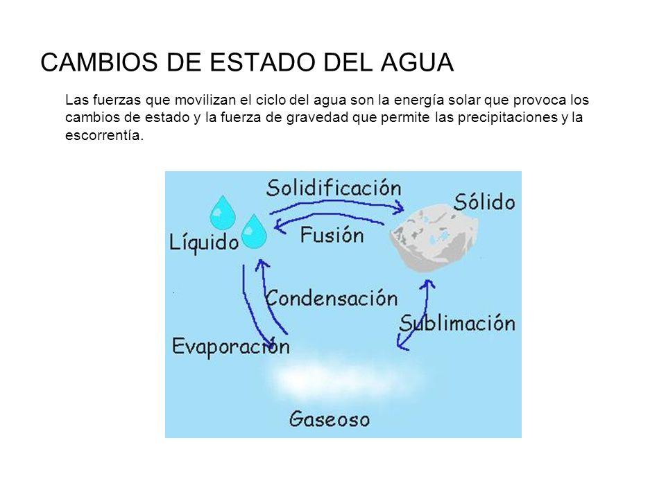 CAMBIOS DE ESTADO DEL AGUA Las fuerzas que movilizan el ciclo del agua son la energía solar que provoca los cambios de estado y la fuerza de gravedad