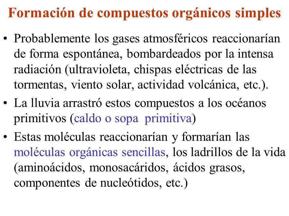 Formación de compuestos orgánicos simples Probablemente los gases atmosféricos reaccionarían de forma espontánea, bombardeados por la intensa radiació