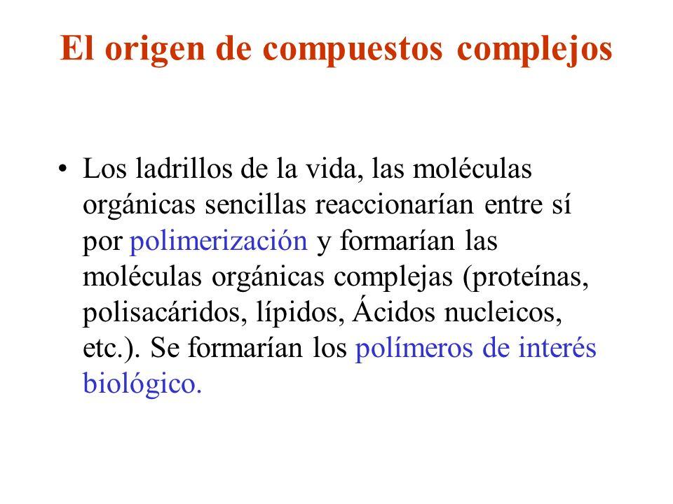 El origen de compuestos complejos Los ladrillos de la vida, las moléculas orgánicas sencillas reaccionarían entre sí por polimerización y formarían la