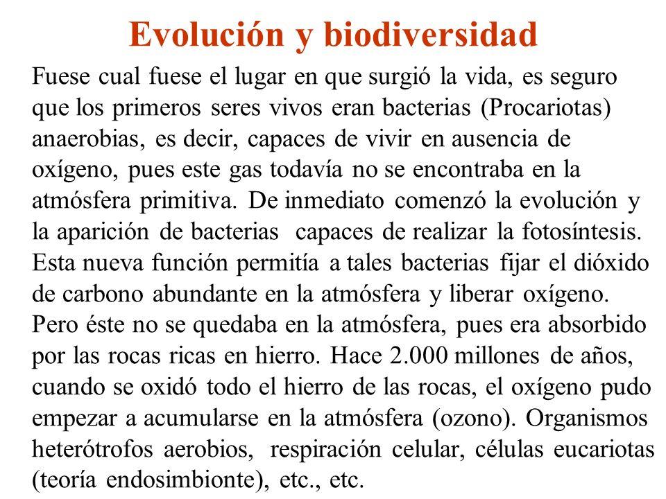 Evolución y biodiversidad Fuese cual fuese el lugar en que surgió la vida, es seguro que los primeros seres vivos eran bacterias (Procariotas) anaerob
