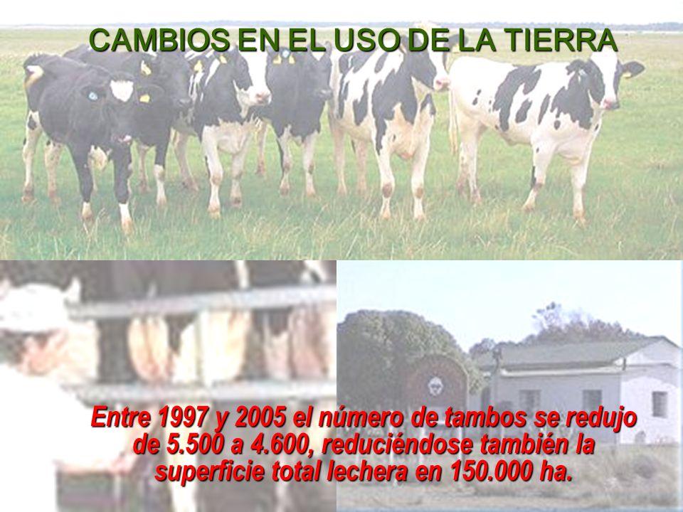 Entre 1997 y 2005 el número de tambos se redujo de 5.500 a 4.600, reduciéndose también la superficie total lechera en 150.000 ha.