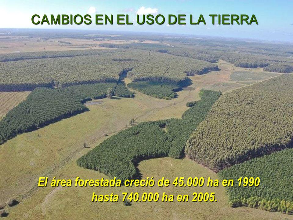 El área forestada creció de 45.000 ha en 1990 hasta 740.000 ha en 2005.
