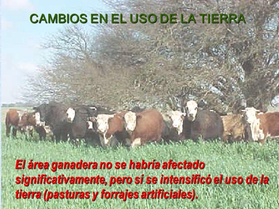 El área ganadera no se habría afectado significativamente, pero sí se intensificó el uso de la tierra (pasturas y forrajes artificiales).