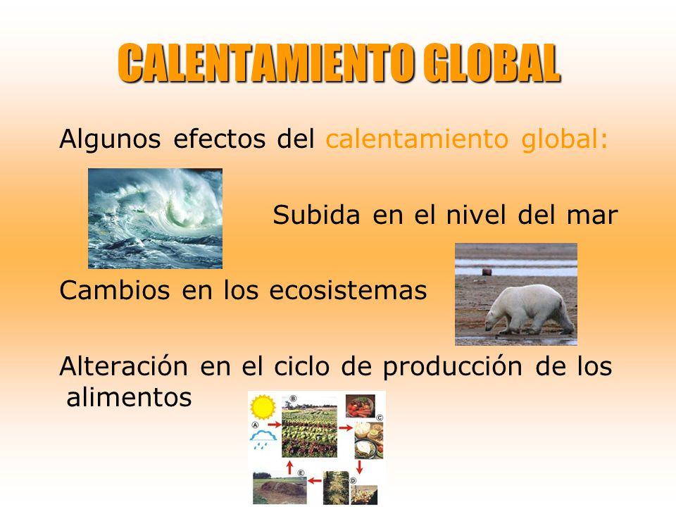 Algunos efectos del calentamiento global: Subida en el nivel del mar Cambios en los ecosistemas Alteración en el ciclo de producción de los alimentos