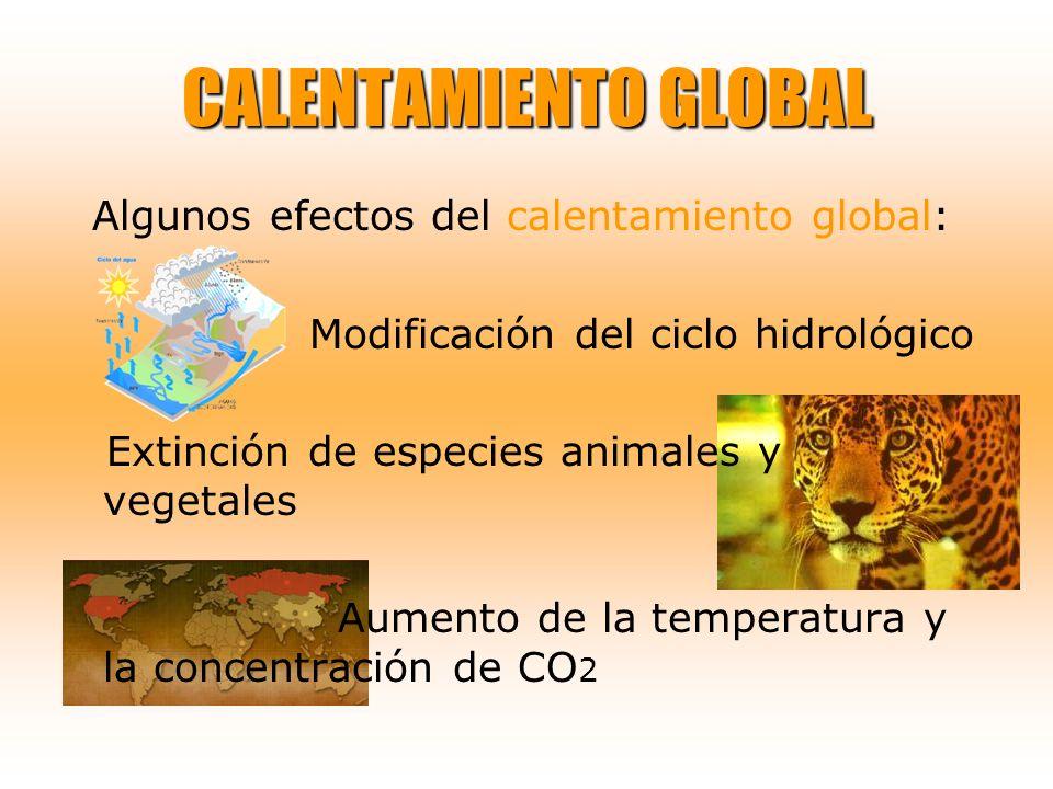 CALENTAMIENTO GLOBAL Algunos efectos del calentamiento global: Modificación del ciclo hidrológico Extinción de especies animales y vegetales Aumento d
