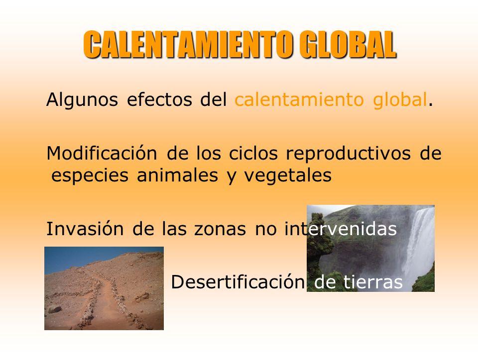 CALENTAMIENTO GLOBAL Algunos efectos del calentamiento global. Modificación de los ciclos reproductivos de especies animales y vegetales Invasión de l