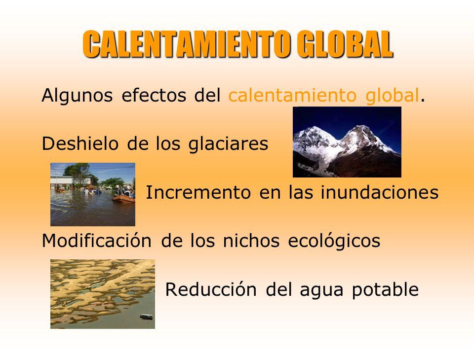 CALENTAMIENTO GLOBAL Algunos efectos del calentamiento global. Deshielo de los glaciares Incremento en las inundaciones Modificación de los nichos eco