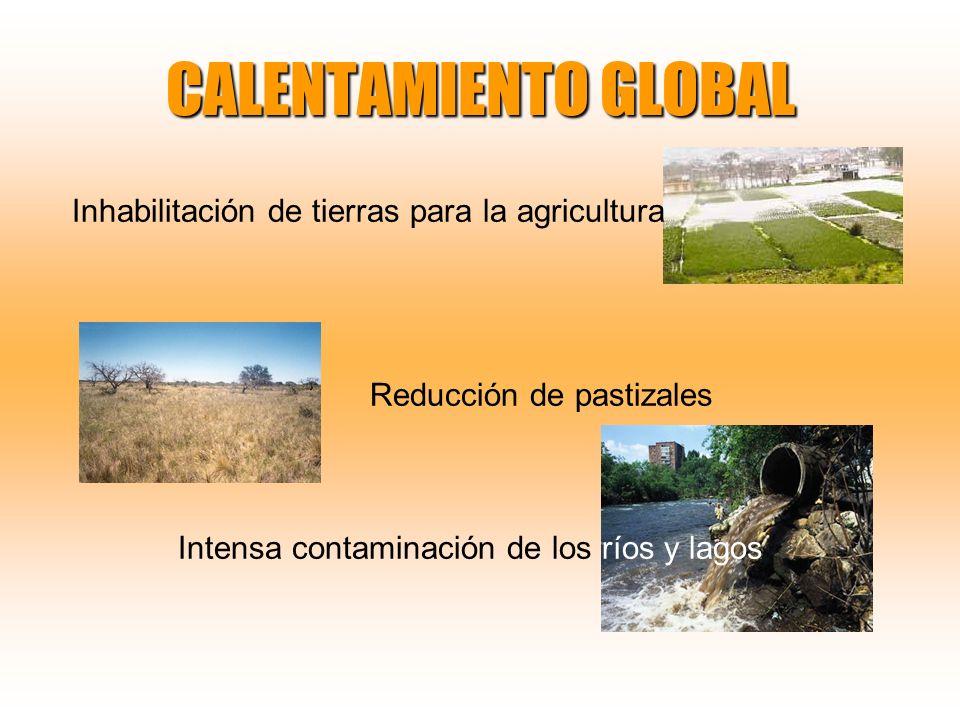 CALENTAMIENTO GLOBAL Inhabilitación de tierras para la agricultura Reducción de pastizales Intensa contaminación de los ríos y lagos