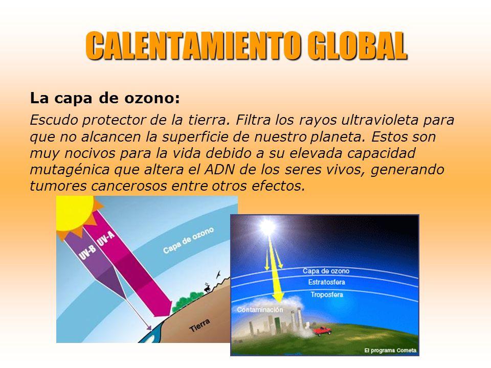 CALENTAMIENTO GLOBAL La capa de ozono: Escudo protector de la tierra. Filtra los rayos ultravioleta para que no alcancen la superficie de nuestro plan