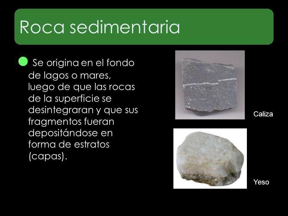 Roca sedimentaria La caliza Se origina en el fondo de lagos o mares, luego de que las rocas de la superficie se desintegraran y que sus fragmentos fue