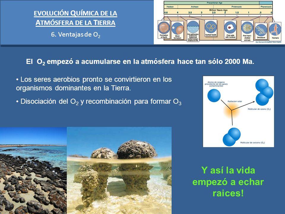 EVOLUCIÓN Q UÍMICA DE LA A TMÓSFERA DE LA T IERRA 6. Ventajas de O 2 El O 2 empezó a acumularse en la atmósfera hace tan sólo 2000 Ma. Los seres aerob