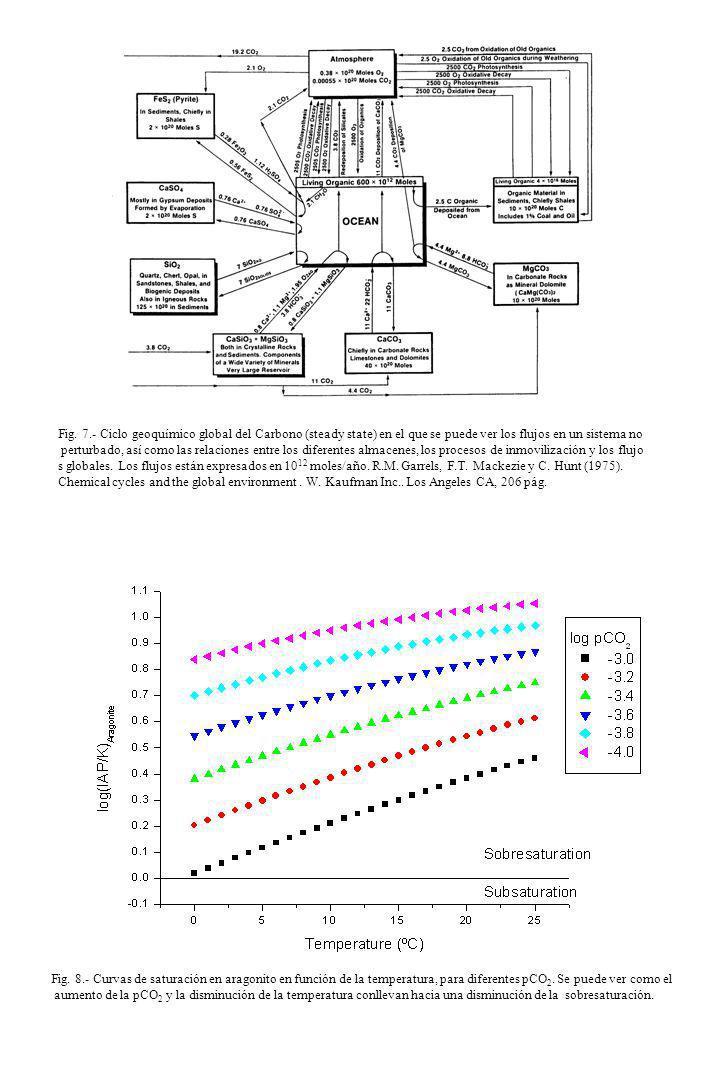 Fig. 7.- Ciclo geoquímico global del Carbono (steady state) en el que se puede ver los flujos en un sistema no perturbado, así como las relaciones ent